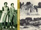 Boeren '50 jaren